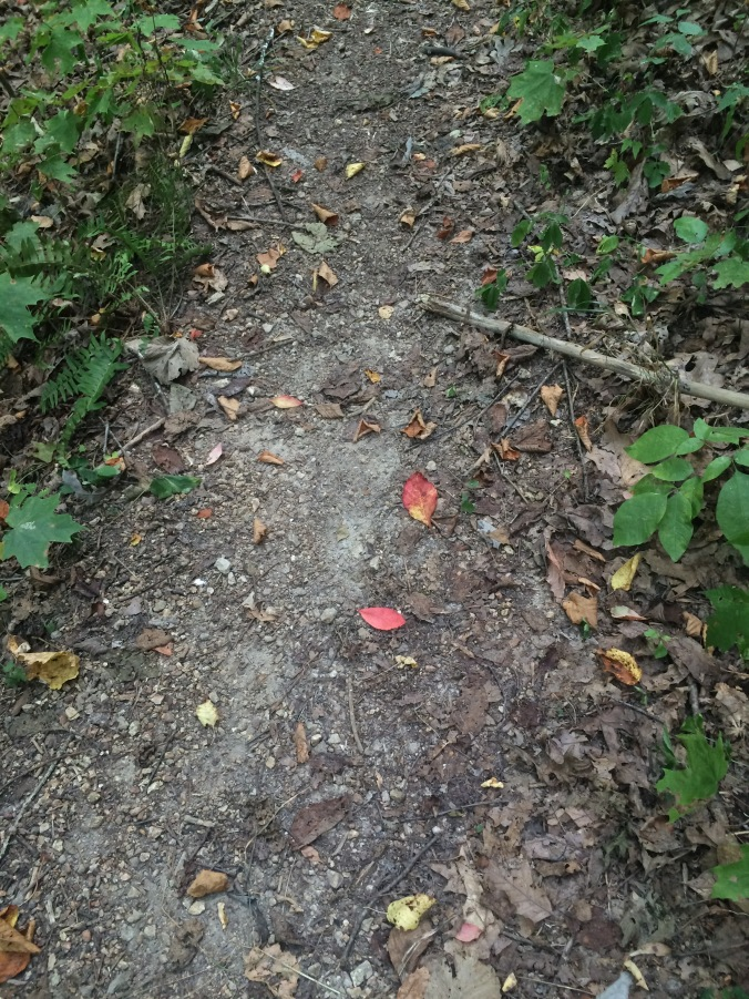 Just two red leaves on the trail this day.  In a week or two the trail will be covered with colored leaf confetti.