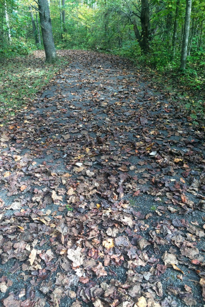 One of my favorite things about autumn is a path covered with colorful and/or crunchy leaves.  It does make it significantly harder to see any wildlife, though.  Clumsy, stomping human feet are loud enough without crackling leaves to make it worse.