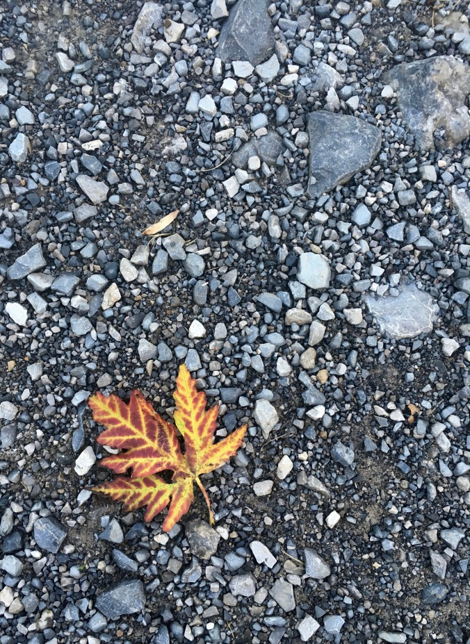 As I made my way from the trailhead back to the gravel parking lot, one more maple leaf found a way to stun me.  The reds, oranges, and yellows leap out from the dull gray gravel.  This was a better gift than receiving a medal for the hike.  Though, if anyone's offering, I wouldn't say no to a medal!