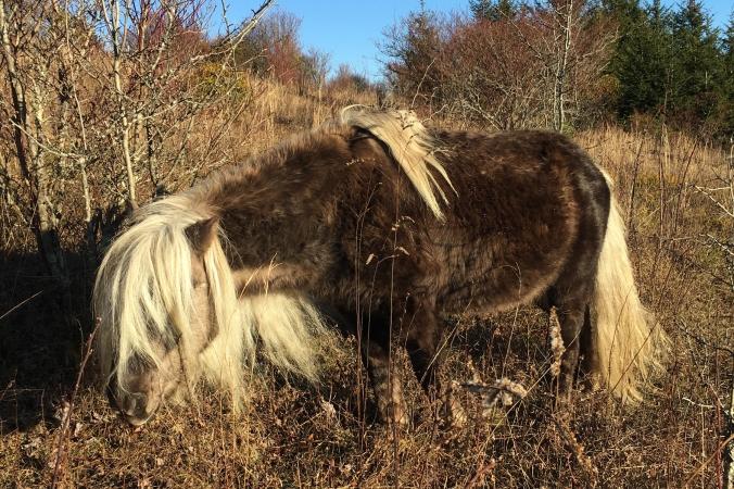 GHSP - rockstar pony
