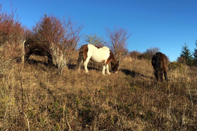 GHSP - three ponies